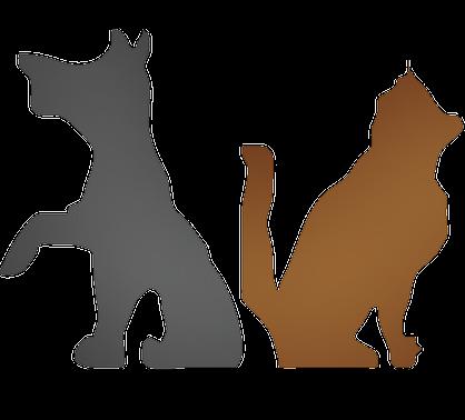Bohème Canin